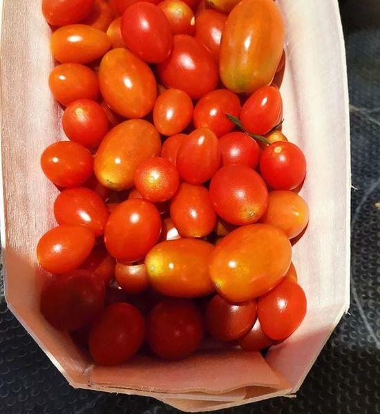tomates cerises mix de couleur